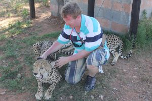 Working with a rescue cheetah in South Africa
