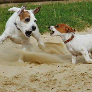 Canine Body Language and Calmness Rocks Mega Bundle