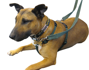 Tellington TTouch Training Harness