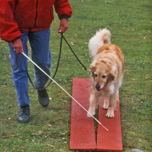 Tellington TTouch® Wand for dogs