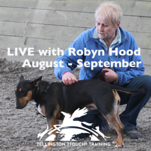 Interactive and Online Tellington TTouch for dogs Level One with Robyn Hood August / Sept 2021