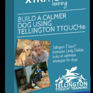 Build Calmness in Your Dog, mini course